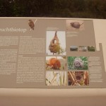 museumsblog: Infotafel Naturlehrpfad, Foto: C. Brinkmann