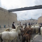museumsblog: muCEM, Marseille, TransHumance
